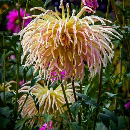 Fred_McBride-Butchart_Gardens-11