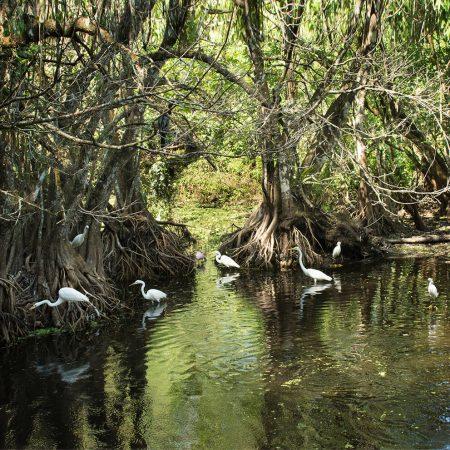 Jim_Solomon-Gathering_at_Corkscrew_Swamp